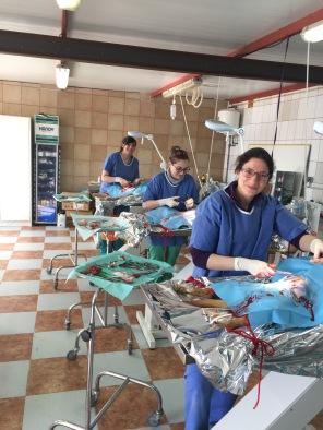 veterinary training course