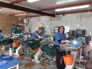 veterinary schools